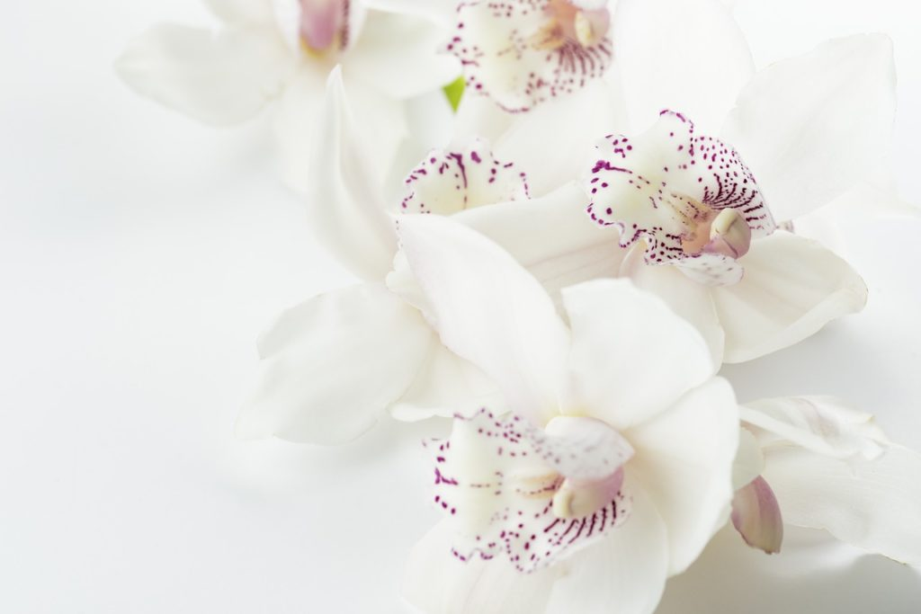 Orchidey v zime